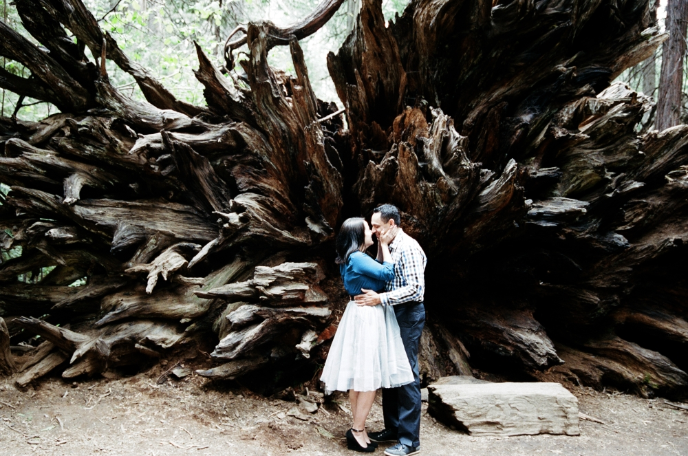 Calaveras Big Trees Engagement ~ Monica & Jeremy | Sonora Wedding Photographer