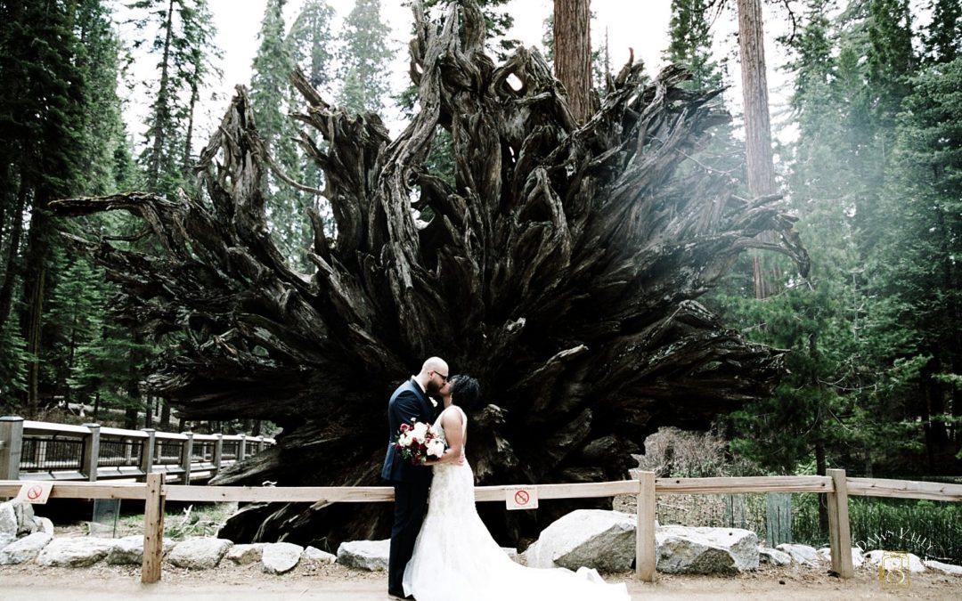 Mariposa Grove Yosemite Elopement: Raven + Steven