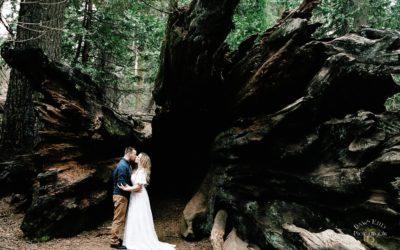 Calveras Big Trees Engagement: Katie + Kevin